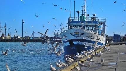 Port rybacki we Władysławowie